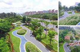 光侨路绿化景观提升工程